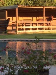 Pool&Horse