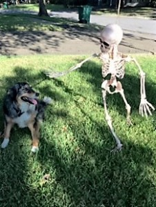 skeletondog